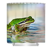 The Green Frog Shower Curtain by Robert Bales
