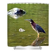 The Green Heron Shower Curtain