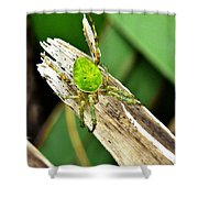 The Green Spider Shower Curtain