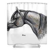 The Grey Arabian Horse 11 Shower Curtain