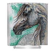 The Grey Arabian Horse 13 Shower Curtain