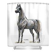 the Grey arabian horse 7 Shower Curtain