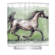 The Grey Arabian Horse 8 Shower Curtain