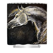 The Grey Arabian Horse 9 Shower Curtain