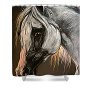 The Grey Arabian Horse Shower Curtain
