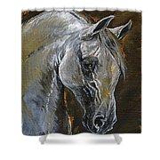 The Grey Arabian Horse Oil Painting Shower Curtain