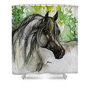 The Grey Horse Drawing Shower Curtain