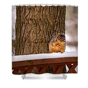 The Grey Squirrel George In Winter Shower Curtain