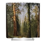 The Grizzly Giant Sequoia Mariposa Grove California Shower Curtain