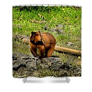 The Grizzly Shower Curtain