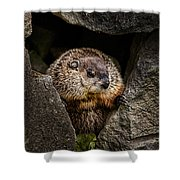 The Groundhog Shower Curtain