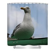 The Gull On The Roof Shower Curtain