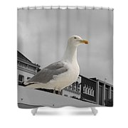 The Gull Shower Curtain