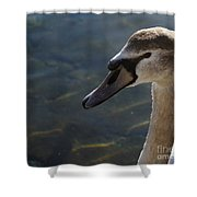 The Haughty Goose  Shower Curtain