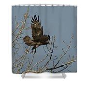 The Hawk Shower Curtain