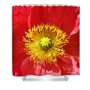 The Heart Of A Red Poppy Shower Curtain