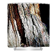 The Heart Of Barkness In Mariposa Grove In Yosemite National Park-california  Shower Curtain