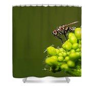 The Hidden World Of Khaki - Featured 3 Shower Curtain