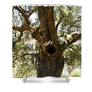 The Hole Tree Santa Margarita Lake Shower Curtain
