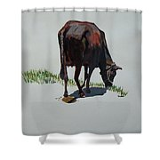 The Holy Cow And Dung. Shower Curtain