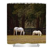 The Horse And The Pony - Standard Size Shower Curtain