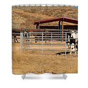 The Horse Ranch 3 Shower Curtain