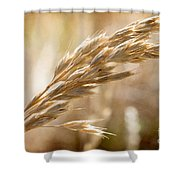 The Hot Gold Hush Of Noon Shower Curtain