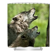The Howling Shower Curtain