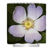 The Humble Dog Rose Shower Curtain