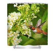 The Hummer And The Butterfly Bush Shower Curtain