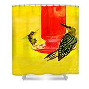 The Humming Bird And Gila Woodpecker Shower Curtain