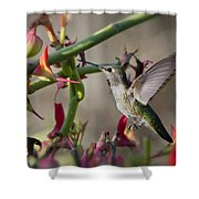 The Hummingbird And The Slipper Plant  Shower Curtain