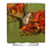 The Hummingbird Turns   Shower Curtain