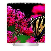 The Hungry Butterfly Shower Curtain