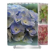 The Hydrangeas Of Late Spring Shower Curtain