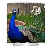 The Indian Peafowl Shower Curtain