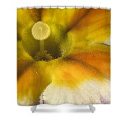 The Inner Circle Of A Primrose Shower Curtain