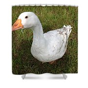The Inquisitive Goose Shower Curtain