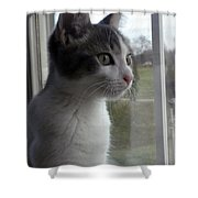 The Inquisitive Kitty Jackson Shower Curtain
