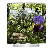 The Iris And St Francis Shower Curtain