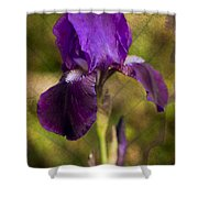 The Iris Shower Curtain