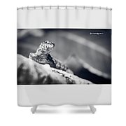 The Iron Lizard II Shower Curtain