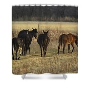 The Jackasses Shower Curtain