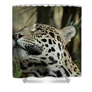 The Jaguar's Gaze Shower Curtain