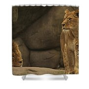 The King And His Queens Shower Curtain