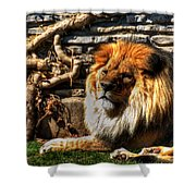 The King Lazy Boy At The Buffalo Zoo Shower Curtain