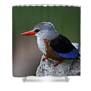The King Of Fishing... Shower Curtain