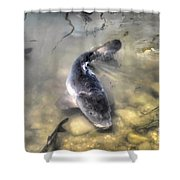 The King Of The Pond Shower Curtain