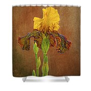 The Kings Prize Iris Shower Curtain