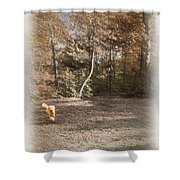 The Labradoodle On The Go Shower Curtain